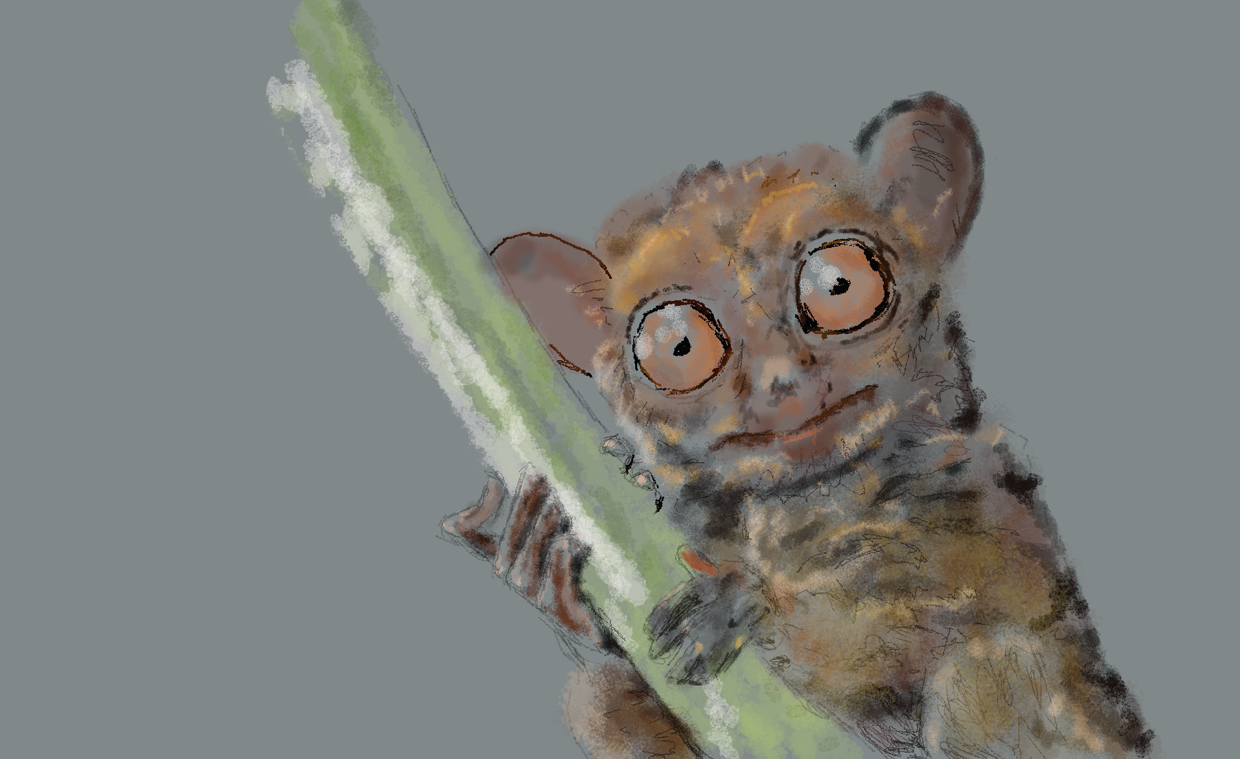 Pygmy Tarsier Digital Drawing