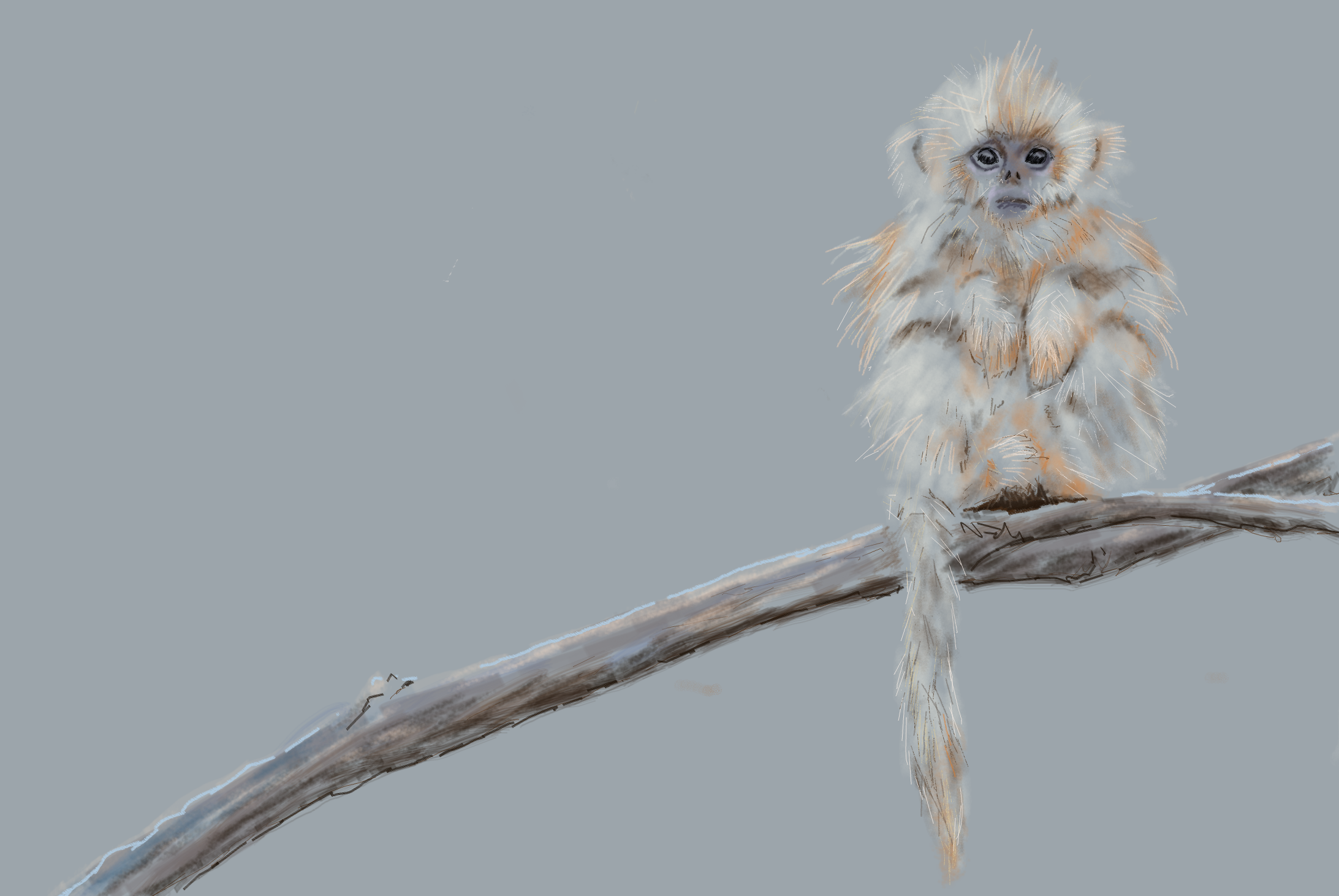 Digital Drawing Baby Blue Nose Monkey