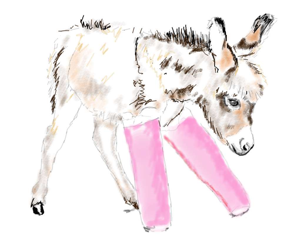 Baby Donkey Digital Drawing Susan Chen superwonky.com